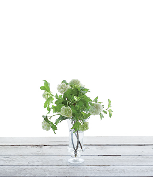При помощи секатора деревянистый стебель нужно срезать под углом, а затем разрезать стебель вдоль примерно на три сантиметра. Поставьте ветки в воду, чтобы нижние листья закрыли края вазы.