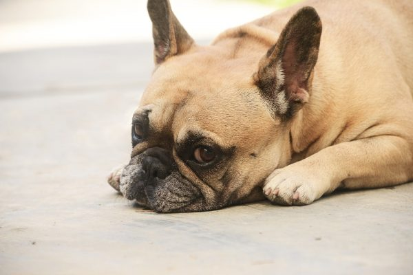 Ревность собак научно не доказана.