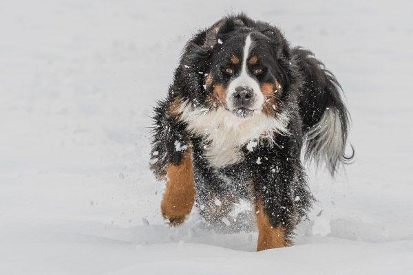 Проверьте себя: как вы думаете, какие эмоции испытывает эта собака?