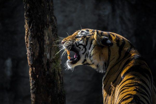 Мозг млекопитающего непрерывно сравнивает полученную награду и ожидания.