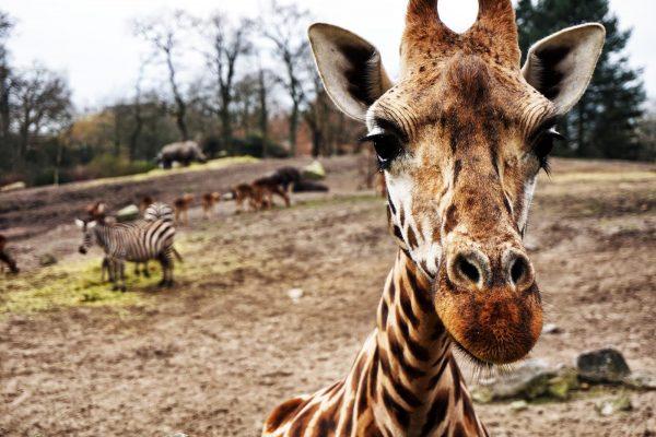 Как все млекопитающие, мы острее всего реагируем на то, что угрожает нашему выживанию.