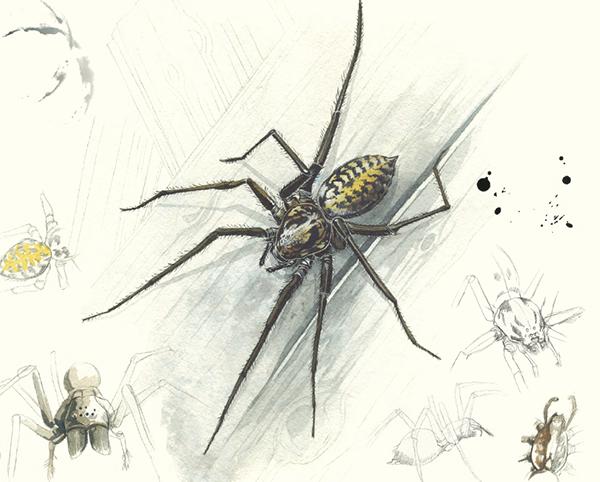 В книге прекрасные акварельные иллюстрации, которые точно передают характер насекомых.