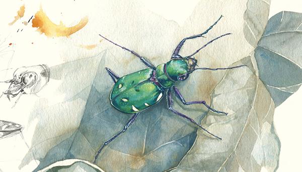 Идея книги и текст принадлежит Франсуа Лассерру. Лассер — член Бюро по защите насекомых и среды их обитания, а также участник Региональной группы образования в области природы и окружающей среды Иль-де-Франс (Graine IdF).