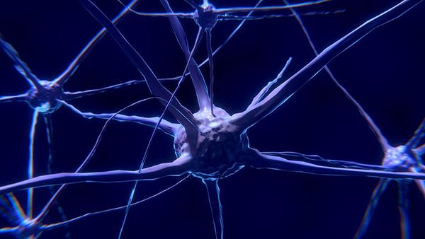 Гибкость и адаптивность — ключевые принципы функционирования нейронов