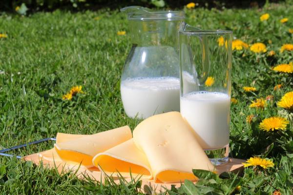 К запрещенным продуктам относятся любые продукты из коровьего, козьего и овечьего молока: йогурт, сыр, молоко, кефир, сливочное масло.