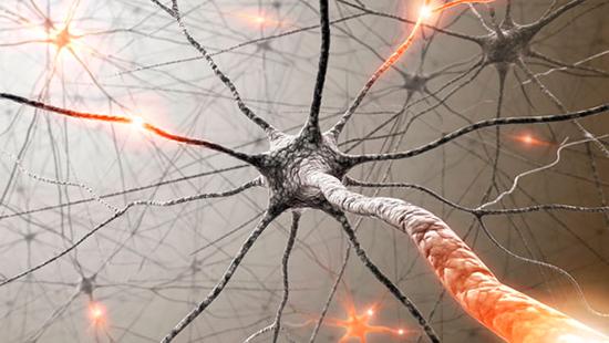 При чтении этого абзаца миллионы чувствительных нейронов в вашем мозге одновременно загораются, пытаясь привлечь ваше внимание.