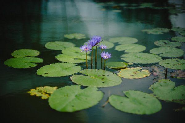 3. В озере растут кувшинки. Каждый день их становится больше в два раза. Если за 48 дней цветы покроют все озеро, то за сколько они распространятся на половину? За ___ дней.