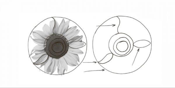 Чтобы нарисовать подсолнух, нужно представить его в виде простых геометрических фигур. Базовые формы вполне очевидны: большая окружность по внешнему краю и несколько кружков поменьше внутри центральной окружности.