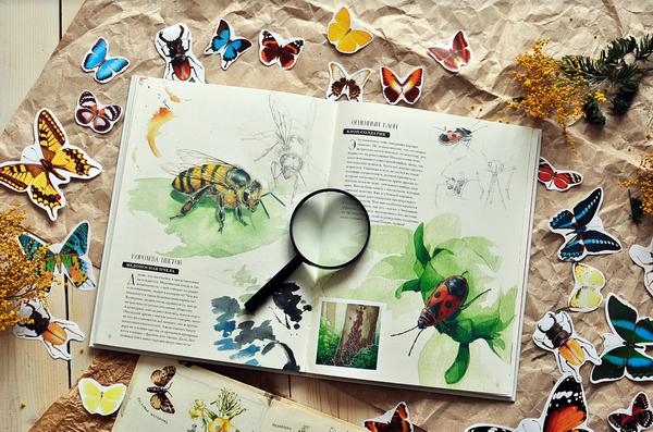 В музее, то есть в книге, представлены наиболее популярные и интересные насекомые.