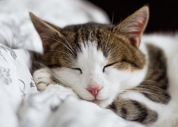 Ложитесь спать пораньше. Постарайтесь лечь не позднее 22.00. Подарите себе настоящую роскошь — полноценный отдых.