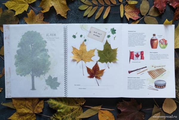Книга расскажет о 16 видах деревьев, которые растут в городе, на улицах и в парках. На подробных рисунках читатель сможет рассмотреть форму кроны и отдельного листа, а потом попробовать найти эти деревья в лесу или в городе.