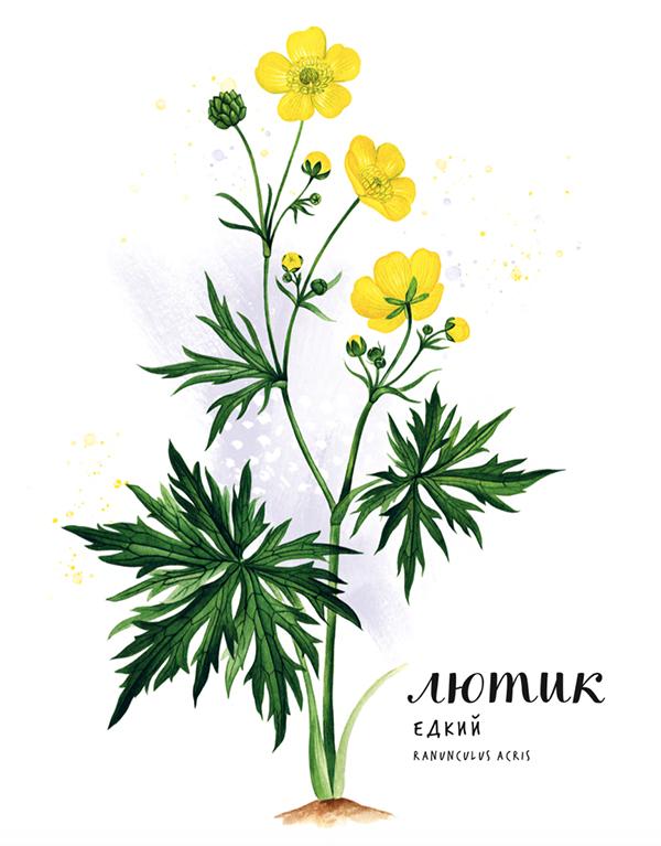 Из книги ребенок узнает, как выглядит растение, из чего оно состоит, а также интересные факты о его жизни и пользе, которую растение приносит людям. Иллюстрации цветов в книге реалистичные, глядя на них, без труда можно найти экземпляр в природе.