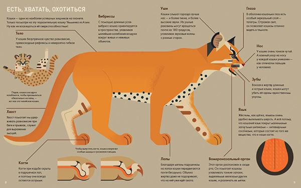 Согласно научным данным, кошки начали жить по соседству с человеком 9–10 тысяч лет назад, то есть примерно в то время, когда люди стали заниматься сельским хозяйством.
