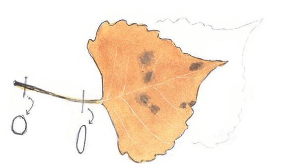 Положите лист (или другой мелкий объект) на бумагу для рисования и обведите. Крепко прижимайте его пальцами, чтобы он не двигался, пока вы обводите контуры. Вот и готов точный рисунок.