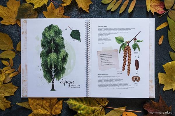 Автор книг-гербариев — кандидат биологических наук Анна Васильева, иллюстратор — художник-ботанист Светлана Винникова. Они рассказали, как работали над книгами.