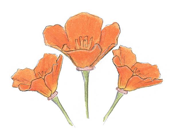 Попробуйте рисовать цветы по схеме — у вас точно получится!