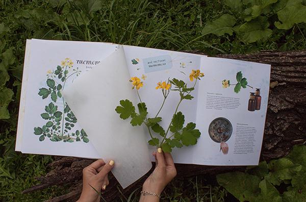 Травянистые растения в нашей средней полосе намного разнообразнее, чем деревья — даже в городах их можно встретить многие десятки видов.
