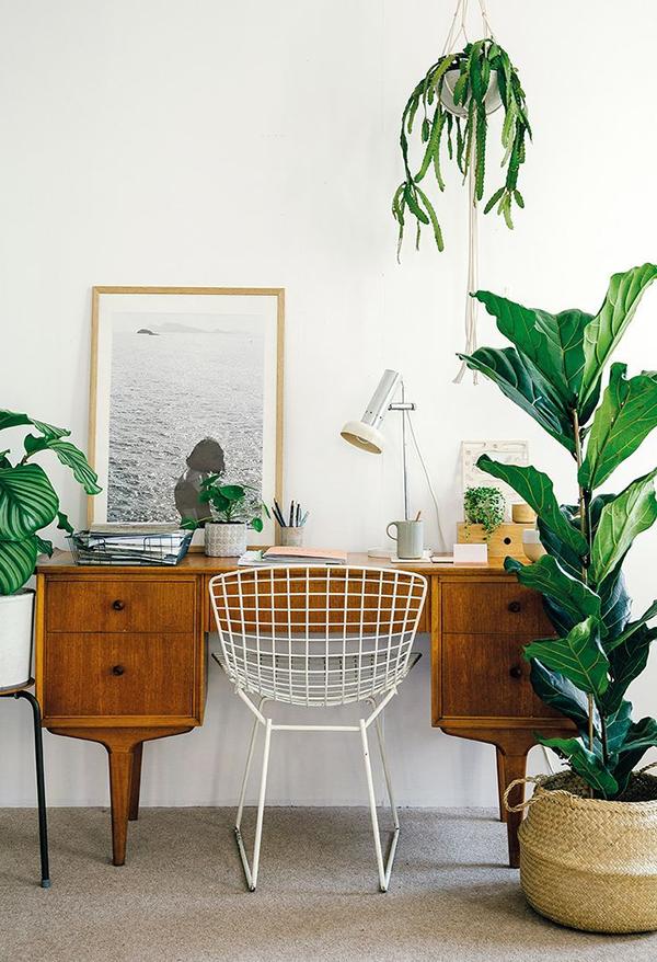 Как привнести природу в свой дом? Добавить комнатных растений. Даже если вы их не очень любите (как, например, я) дайте шанс хотя бы одному. Выберите что-то непривередливое и засухоустойчивое.