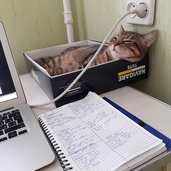 — Мой самый большой лайфхак за время удаленной работы такой: нужно поставить коробку для кота рядом с компьютером.