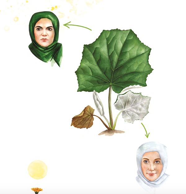 Знаете, почему мать-и-мачеха так называется? Из-за листьев: верхняя их сторона гладкая и холодная, как недовольное лицо мачехи, а нижняя, покрытая белым пушком, — мягкая и тёплая, как материнская ласка.