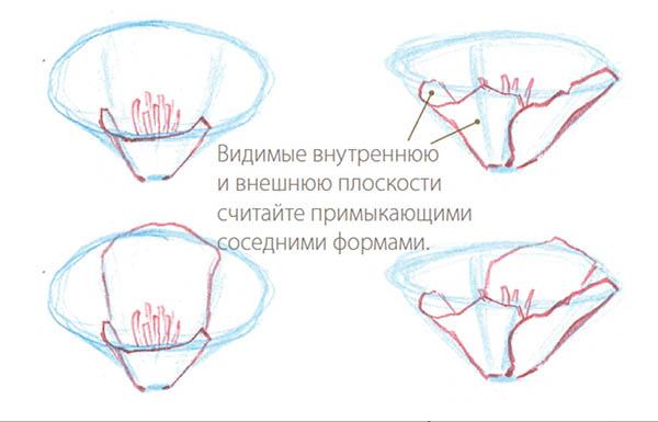 Продолжайте воспроизводить форму передних лепестков. Закройте один глаз и посмотрите на внутреннюю и внешнюю плоскости. Если скопировать их точно, лепесток будет выглядеть естественно.