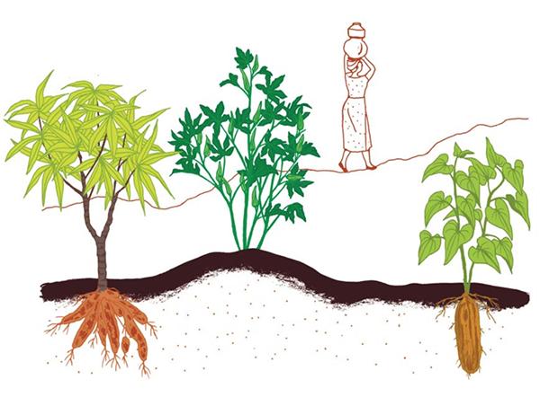 В книге есть описания 70 видов овощей, фруктов и орехов. Виноград, арбуз, клубника, хурма... Среди знакомых растений попадаются и экзотические. Маниок, ямс и бамия...