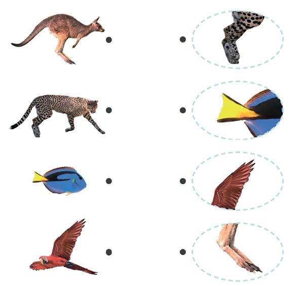 Разные органы служат для разных целей. Одни помогают животным видеть, другие дышать, есть, слышать. В этом упражнении рассматриваются органы передвижения. Соедини линией каждое животное с частью тела, нужной ему для передвижения.