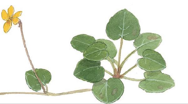 У листьев и лепестков есть толщина. Имитируйте блик на их ближних краях тонкой линией белой гелевой ручки или карандаша.