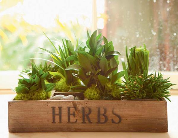 Попробуйте вырастить любимый всеми зелёный лук на подоконнике — это вдохновляет!