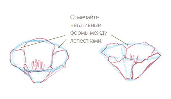 Переходите к дальним лепесткам. Уже ясно, где заканчиваются их контуры. Обращайте внимание на негативные формы: они не менее важны, чем формы самих лепестков.