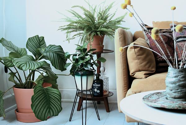 Обыграйте высоту: растения, размещенные на разных уровнях, привлекают внимание. Некоторые пышные цветы — например, калатея — заметны даже на полу.