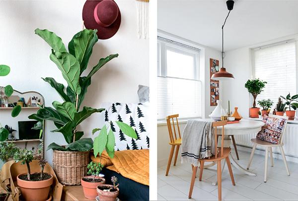 Фикус прекрасно выглядит и самостоятельно, и в композициях. Используйте одно растение в качестве живой скульптуры с большим количеством белого и дерева.