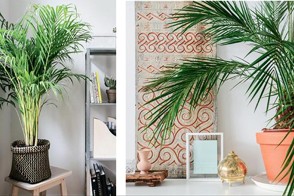 Домашние пальмы любят большие высокие горшки, потому что их корни уходят далеко в землю. Чтобы скрыть грунт, оберните горшок куском красивой ткани. Пусть она сочетается, например, с декоративными подушками или цветовой гаммой интерьера.