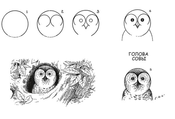 Автор начинает с простых сюжетов: из круга делает сову, из треугольника — ёлку и редиску. И постепенно переходит к более сложным формам — самолётам, автомобилям, пингвинам.