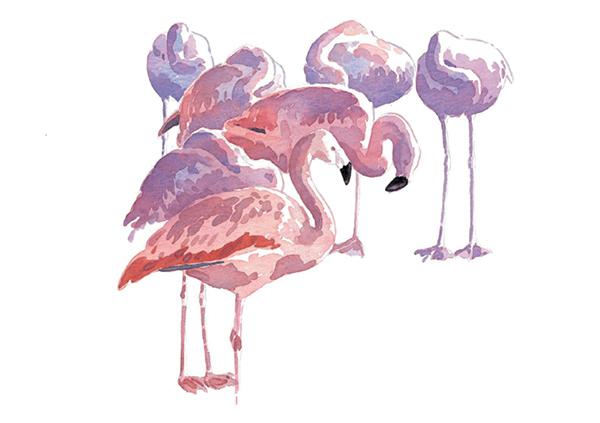 В отличии от меха перья растут не по всему телу — рисовать их нужно иначе. Для имитации мягких перьев влажной кистью размойте все четкие границы. А сложный узор