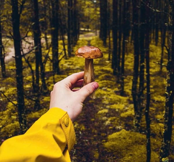 Мыслите позитивно: искать съедобные дары непросто, но если вы захватите с собой перекус и настроитесь на приятный день на природе, то не огорчитесь, даже если ничего не найдете.