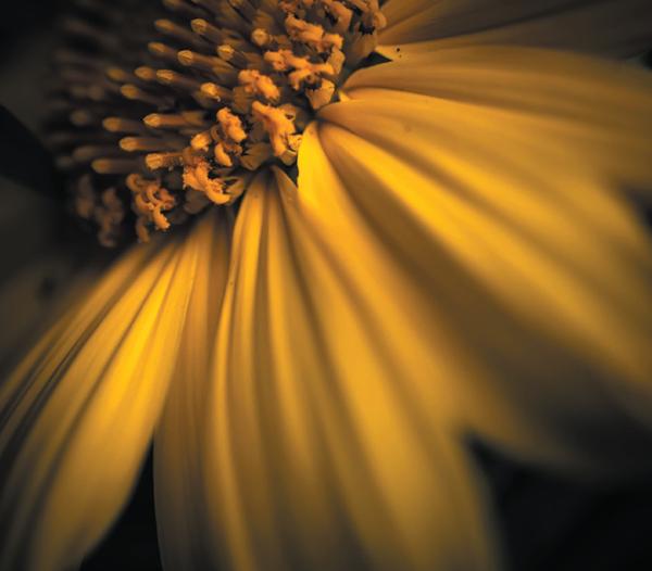 Свет для фотографа — это святое. Вот несколько мини-упражнений, которые можно делать, чтобы познакомиться со светом ближе.