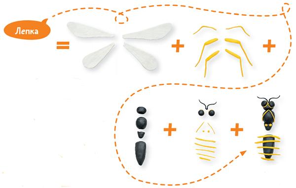 Тело насекомых состоит из трёх отделов: головы, груди и брюшка. Ног у насекомых три пары. Они крепятся к грудному отделу. Кроме того, от груди отходят две пары крыльев. На голове имеются два усика и два глаза.