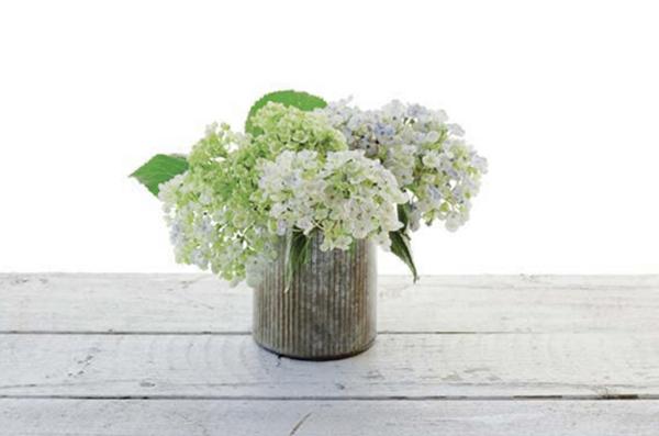Подрежьте стебли гортензий по высоте вазы. Пышные соцветия должны закрыть край. Обмакните срезы в жженые квасцы и поставьте цветы в вазу.