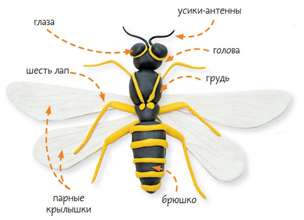 Учёными описано свыше миллиона видов насекомых. Тем не менее каждый год открывают множество новых видов.