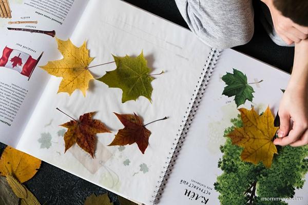 Красивые листики можно спрятать в книгу «Мой гербарий. Листья деревьев»