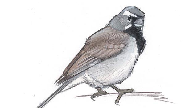 Если увидели перо птицы, лучше подбирайте, а нарисуйте их. Очень интересно определять, какой птице принадлежит незнакомое перо.