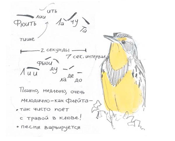 Услышав птицу в природе, запишите свою интерпретацию звуков. Если птицу не видно, напишите ее название рядом со звуками. Например, так: «Таинственная птица, песня № 3», — и весь день прислушивайтесь к ней. Когда разглядите птицу, добавьте ее название. Сосредоточенность, описание и интерпретация звуков помогут запомнить песню.