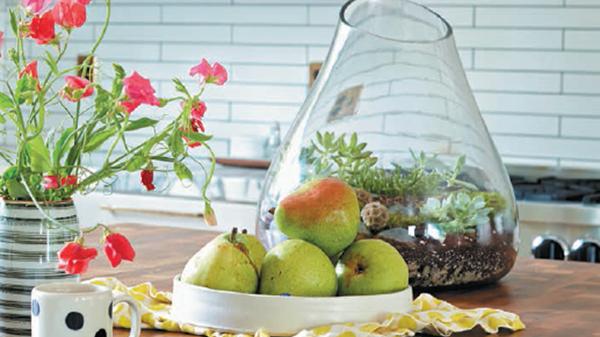 Регулярно сбрызгивайте камешки и поливайте растение как обычно.