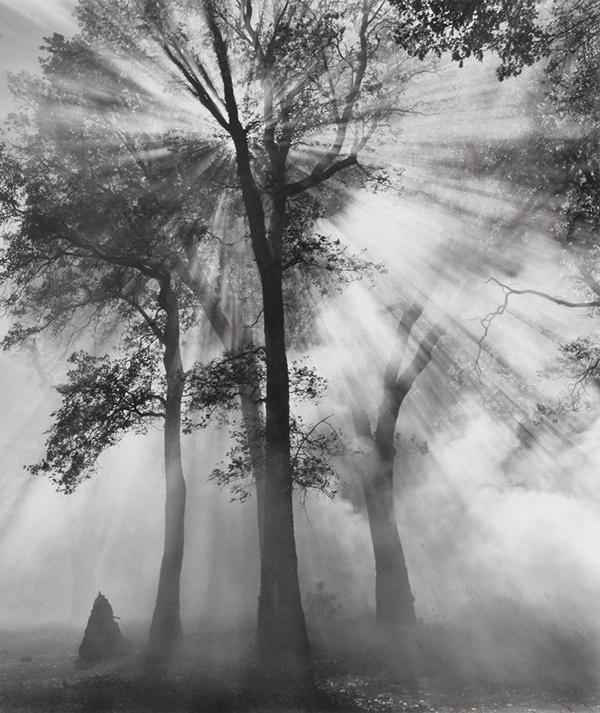 Мастера света. Изучайте работы известных фотографов и то, как они используют свет. Следите за светом в кино и трехмерных объектах — в скульптуре, архитектуре, интерьерном дизайне. Обратите внимание на картины Эдварда Хоппера, портреты Рембрандта, фотографии Анселя Адамса, автопортреты Синди Шерман. Исследуйте цвет и свет во всех формах искусства.
