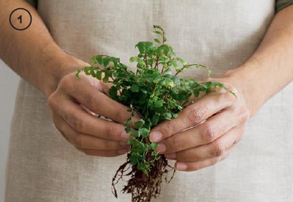 Аккуратно снимите избыток почвы с клубка корней растения. Оберните клубок корней влажным сфагновым мхом.