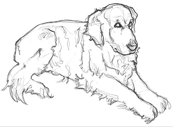 Рисование — это не только изображение линий Это, прежде всего, наблюдение. А контурный рисунок — отличный способ творчески раскрепоститься и одновременно развить наблюдательность. Особенно он полезен, если вы хотите изображать животных с натуры.