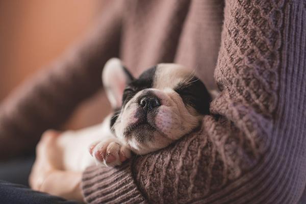Чтобы получить окситоцин, обнимите собаку или котика.