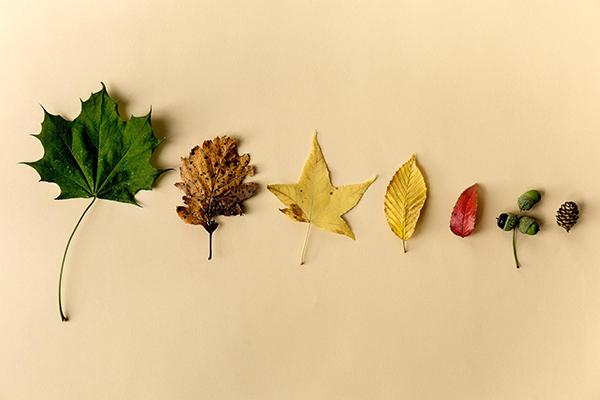 Есть множество проектов, для которых используются яркие осенние листья. Сушить листья можно по-разному: под прессом или между страницами толстой книги. А мы расскажем, как сушить листья в микроволновке. В этом случае весь процесс займет считаные минуты.