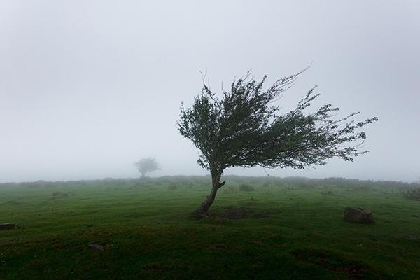 Человек, охваченный сильными эмоциями, похож на это дерево.